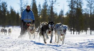 Baikal Dog Sledding - Baikal Explorer